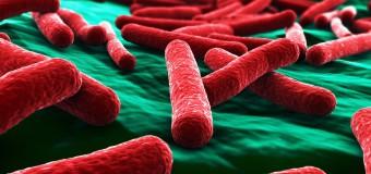 Чувствительность к антибиотикам клинических изолятов Escherichia coli, выделенных от собак и кошек в США в период с 2008 по 2013 г.