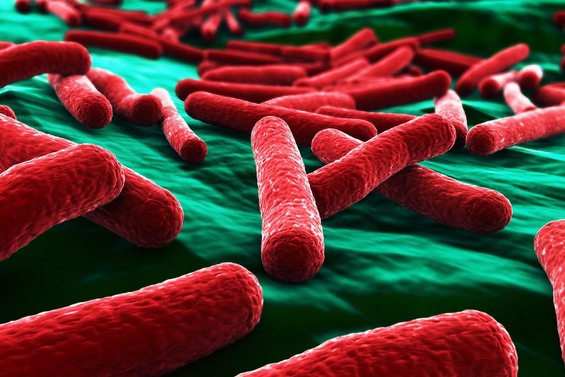 E.coli - кишечная палочка